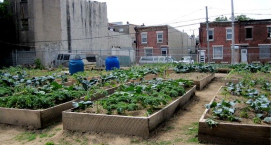 An urban garden with raised beds.