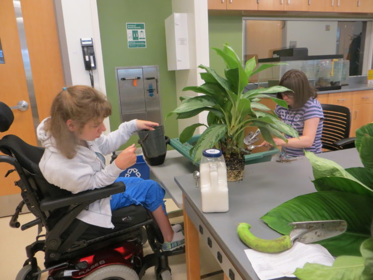 A student using a wheelchair while working on plants in a science lab